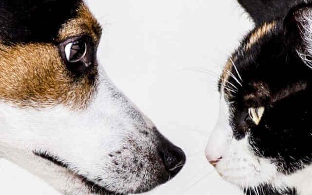 ペット(犬・猫)と楽しく暮らす、おすすめ飼い方