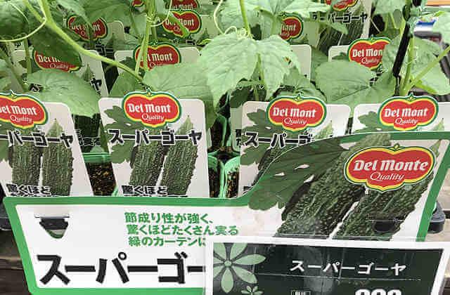 スーパーゴーヤ栽培、プランターで育て方