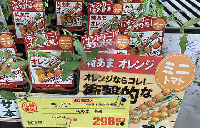 純あまオレンジミニトマト栽培、プランターで育て方